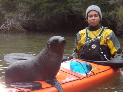 Baby harbor seal in Shag Harbor