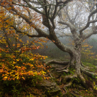 Another Autumn (Sharon Canter)