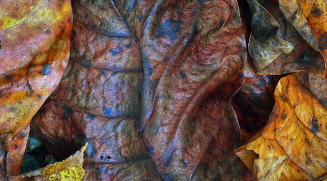 Autumn Leaves (Charles Johnson)