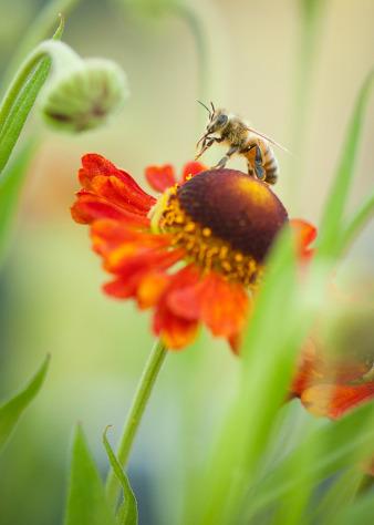 Just Bee (Amanda Prince), Finalist - Flora & Fauna Category