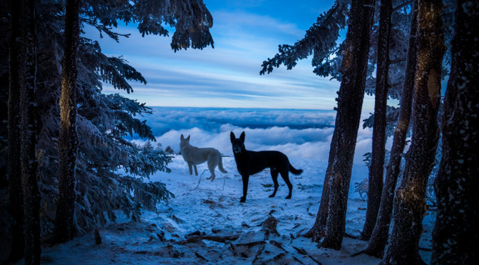 """""""Winter Fairy Tale"""" by Steve Yocom"""