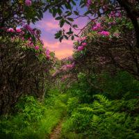"""Spring Pathway"" by J Smilanic"