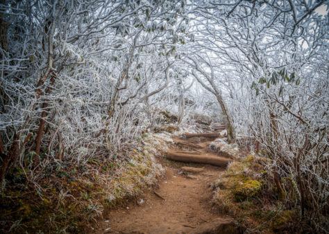 """An Entrance To Winter"" by Robert Stephens"